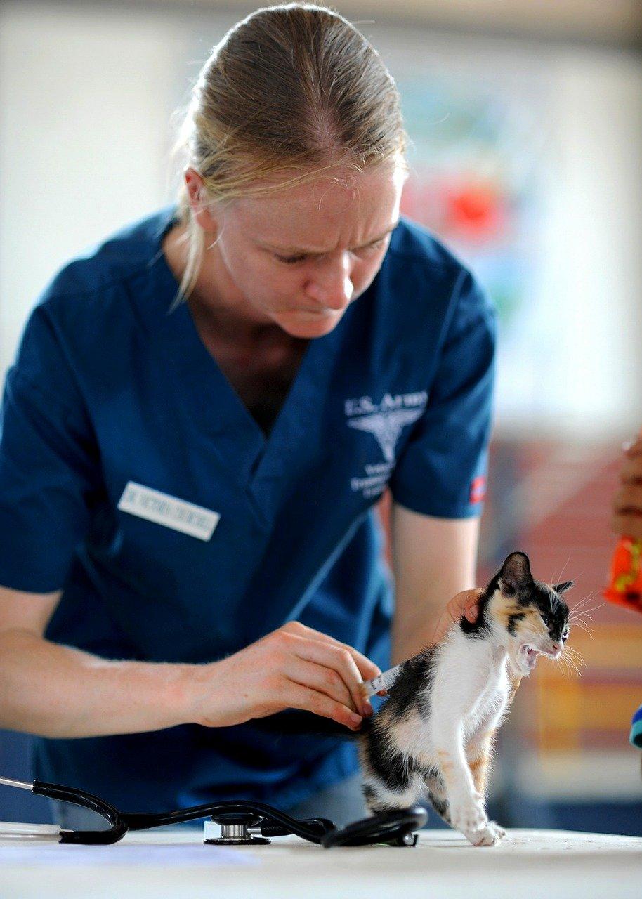 動物醫院能夠治療牛蜱熱